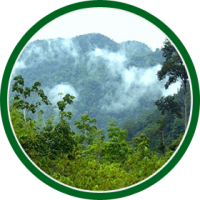 bullet_rainforest